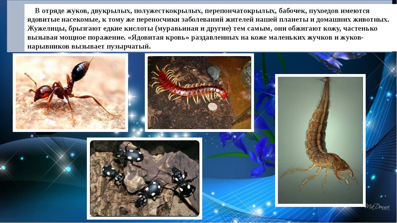 В отряде жуков, двукрылых, полужесткокрылых, перепончатокрылых, бабочек, пух...