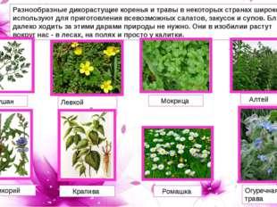 Разнообразные дикорастущие коренья и травы в некоторых странах широко использ