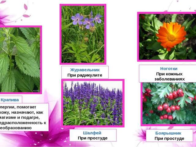 При аллергии, помогает очистить кожу, назначают, как при ревматизме и подагре...