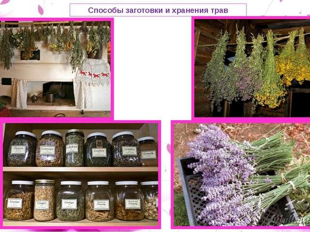 Способы заготовки и хранения трав