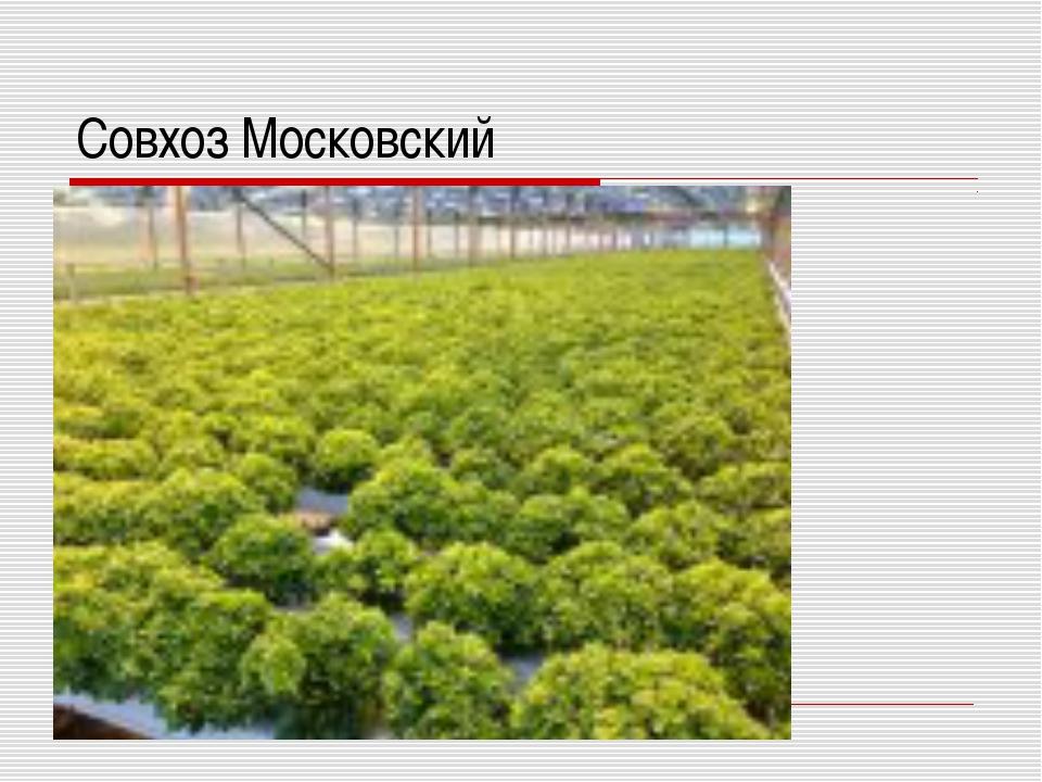 Совхоз Московский