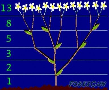 1306315101_forex_fibonacci-branches.jpg