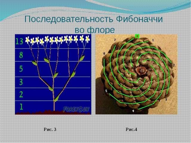 Последовательность Фибоначчи во флоре Рис. 3 Рис.4