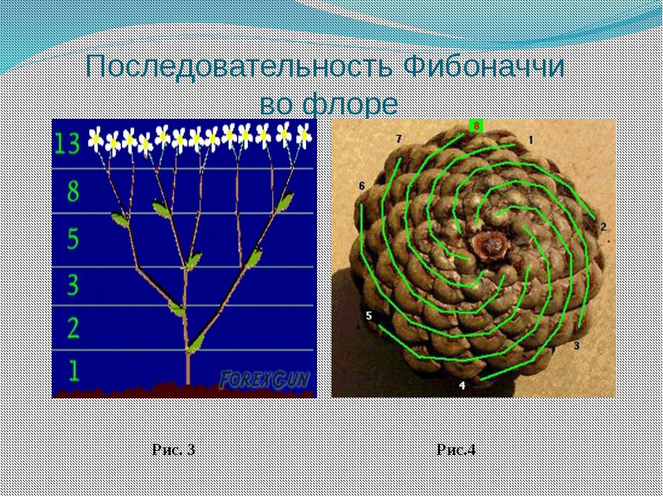 an overview of the math project of fibonacci sequence In mathematics, the fibonacci numbers are the numbers in the following integer sequence, called the fibonacci sequence development projects that.