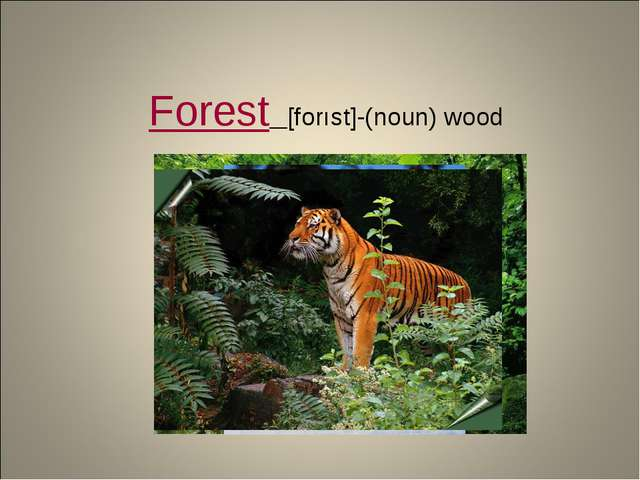 Forest [forıst]-(noun) wood