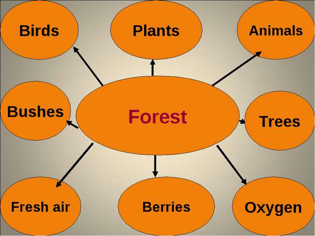 Forest Birds Animals Bushes Fresh air Berries Oxygen Plants Trees