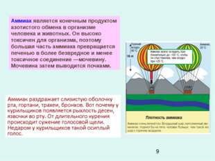 Аммиак является конечным продуктом азотистого обмена в организме человека и ж