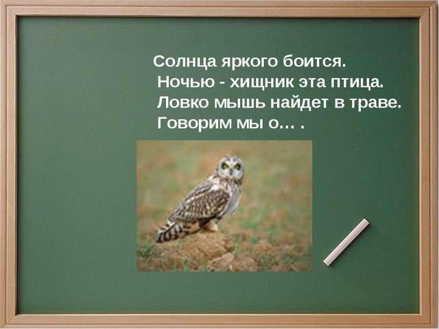 Солнца яркого боится. Ночью - хищник эта птица. Ловко мышь найдет в траве. Го...