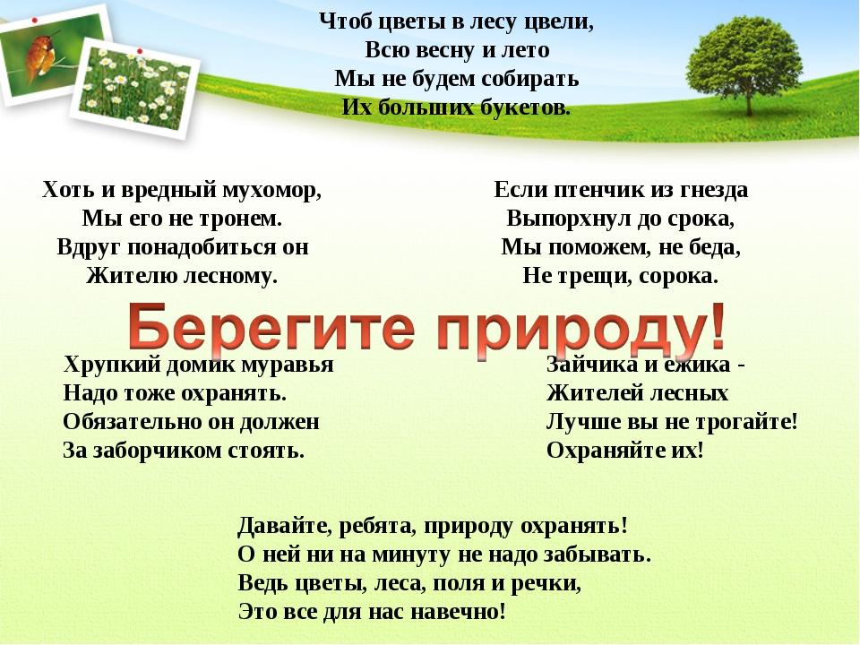 Чтоб цветы в лесу цвели, Всю весну и лето Мы не будем собирать Их больших бук...