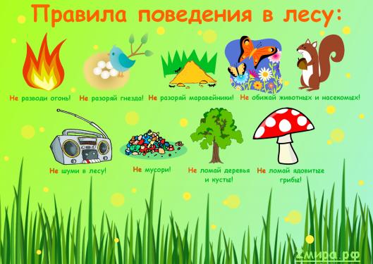 Правила поведения в лесу картинки для детей - Поделки