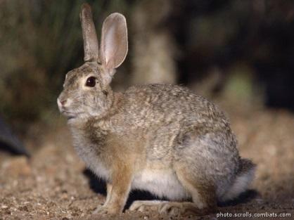 Почему у зайца губа рассечена (эстонская сказка), Почему у зайца губа рассечена - сказки: русские, народные, народов мира