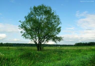 Продам земельный участок для строительства жилья в Козлові
