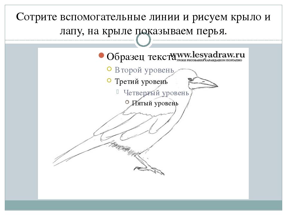 Сотрите вспомогательные линии и рисуем крыло и лапу, на крыле показываем перья.