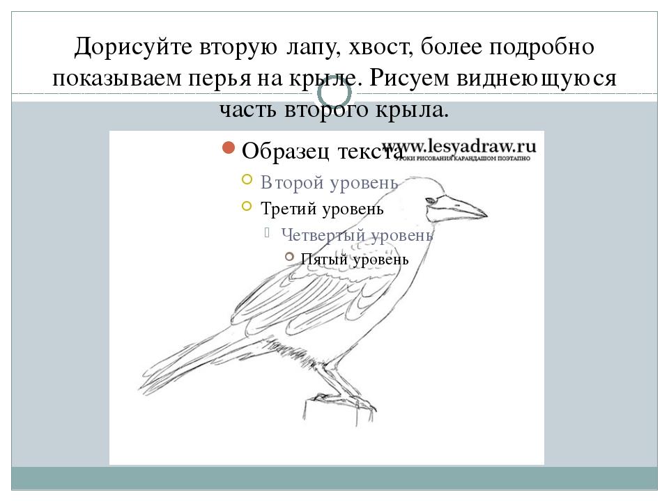 Дорисуйте вторую лапу, хвост, более подробно показываем перья на крыле. Рисуе...