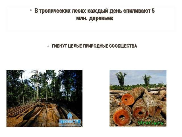 ГИБНУТ ЦЕЛЫЕ ПРИРОДНЫЕ СООБЩЕСТВА В тропических лесах каждый день спиливают...