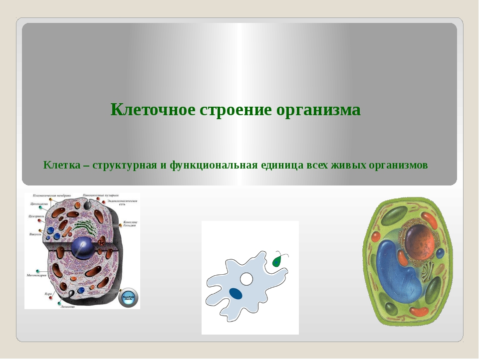 Клеточное строение организма Клетка – структурная и функциональная единица вс...