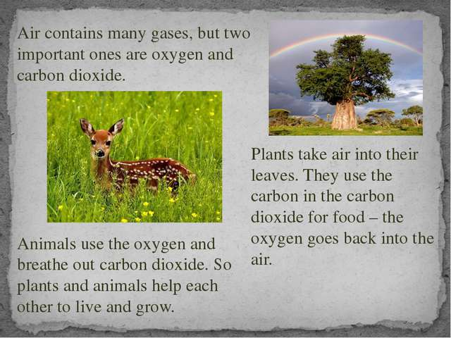 Air contains many gases, but two important ones are oxygen and carbon dioxide...