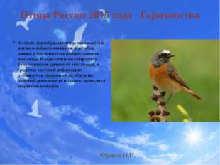 Птица России 2015 года Горихвостка В «свой» год избранная птица оказывается в