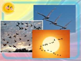 …или дальности перелета птиц. Это стимулирует мотивацию учения, формирует спо