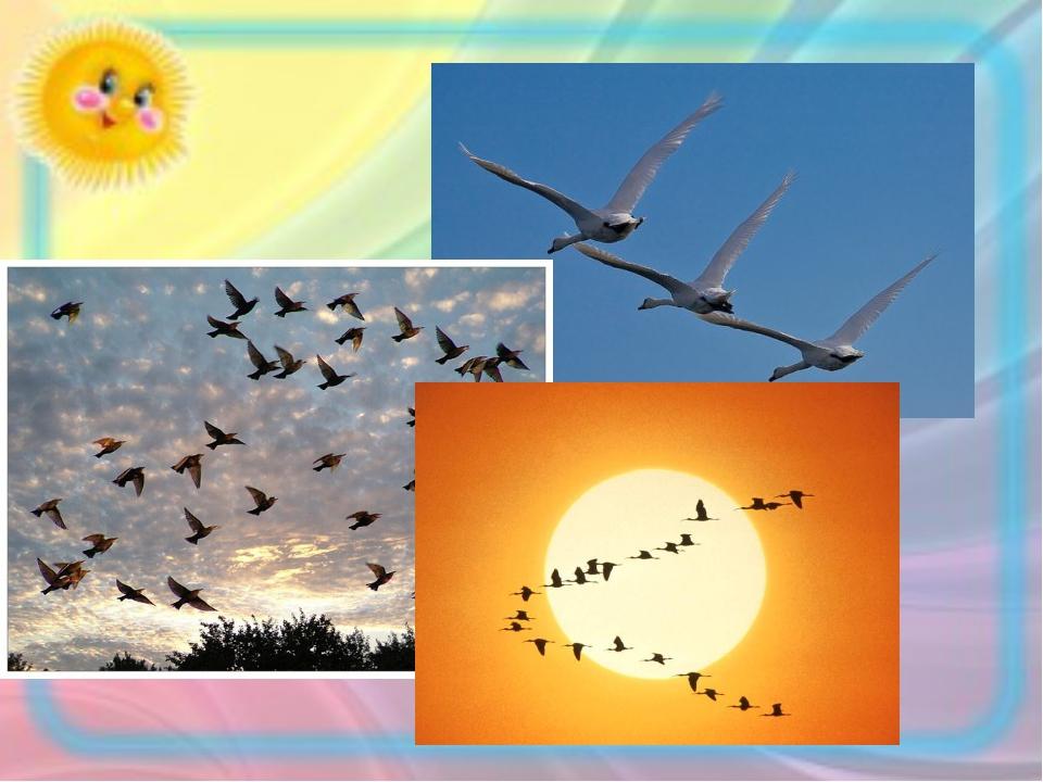 …или дальности перелета птиц. Это стимулирует мотивацию учения, формирует спо...