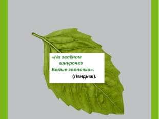 Третий ярус лесов - это … «На зелёном шнурочке Белые звоночки». (Ландыш).