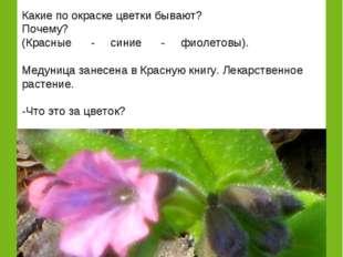Догадайтесь: «Что за цветок, у которого на одном стебле разные по окраске цве