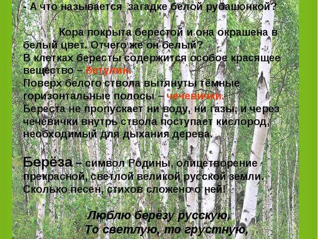 Загадка: «На поляне девочка: В белых рубашонках, В зелёных полушалках?» (Берё...