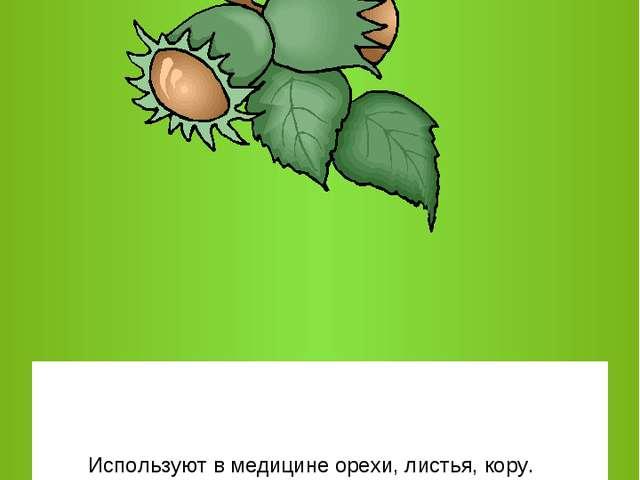 Используют в медицине орехи, листья, кору.