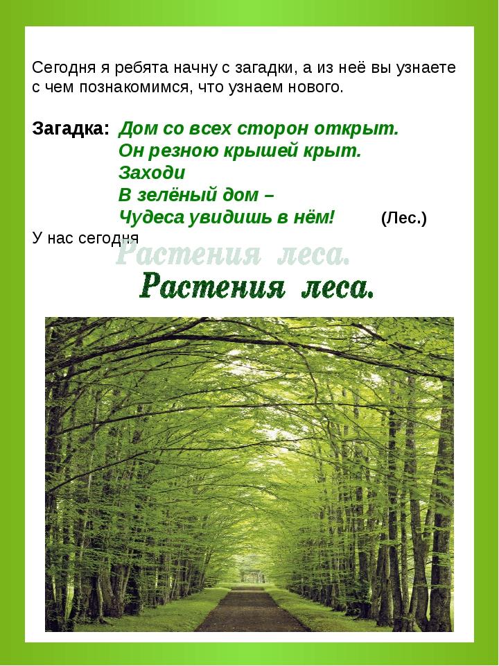 загадки про охрану растений с картинками том, как можно