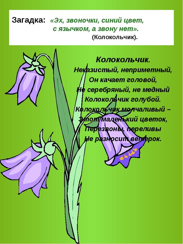 достоин картинка и описание цветка колокольчик земной