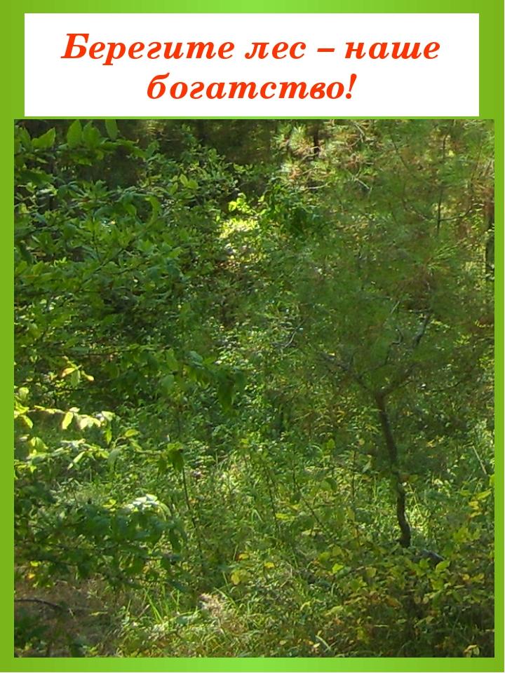 Берегите лес – наше богатство!