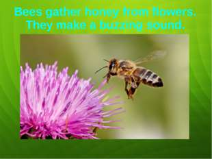 Bees gather honey from flowers. They make a buzzing sound.