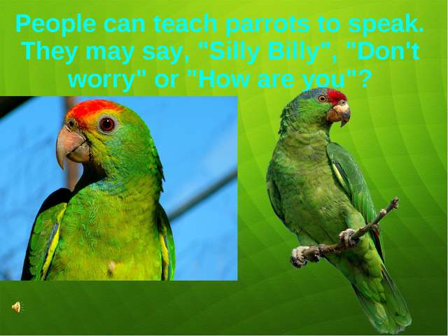 """People can teach parrots to speak. They may say, """"Silly Billy"""", """"Don't worry""""..."""