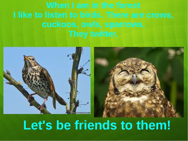 When I am in the forest I like to listen to birds. There are crows, cuckoos,...
