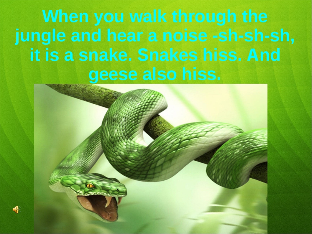 When you walk through the jungle and hear a noise -sh-sh-sh, it is a snake. S...