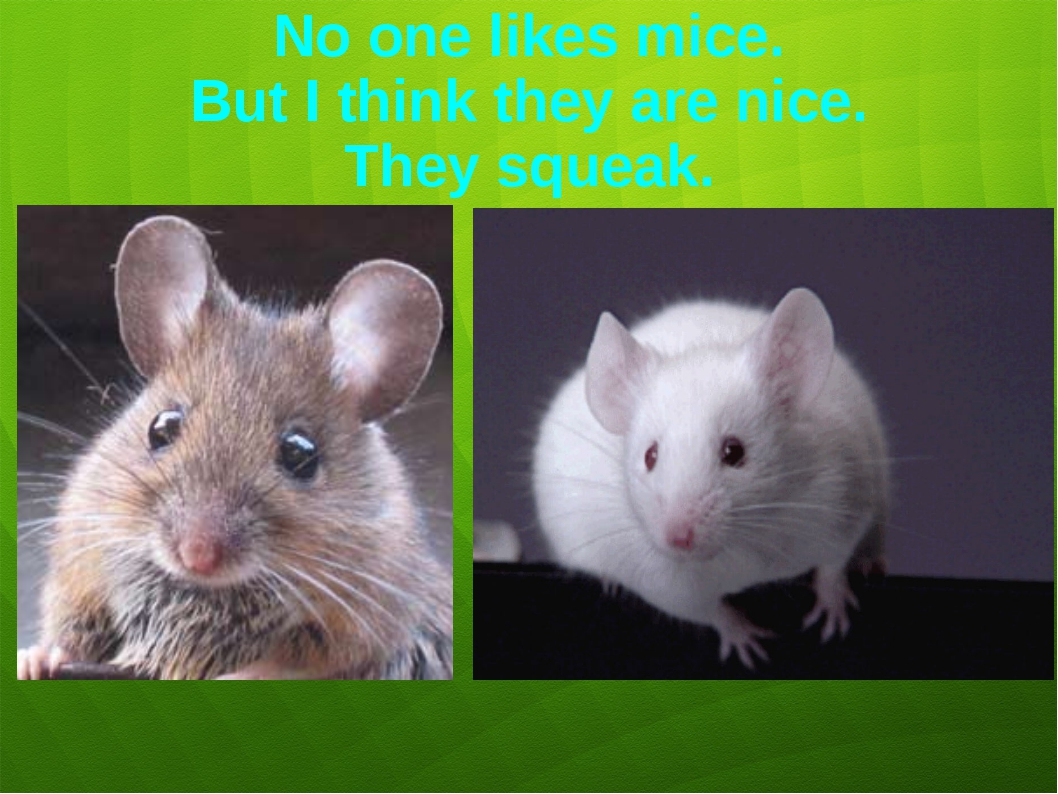 No one likes mice. But I think they are nice. They squeak.