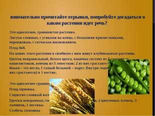 внимательно прочитайте отрывки, попробуйте догадаться о каком растении идет р