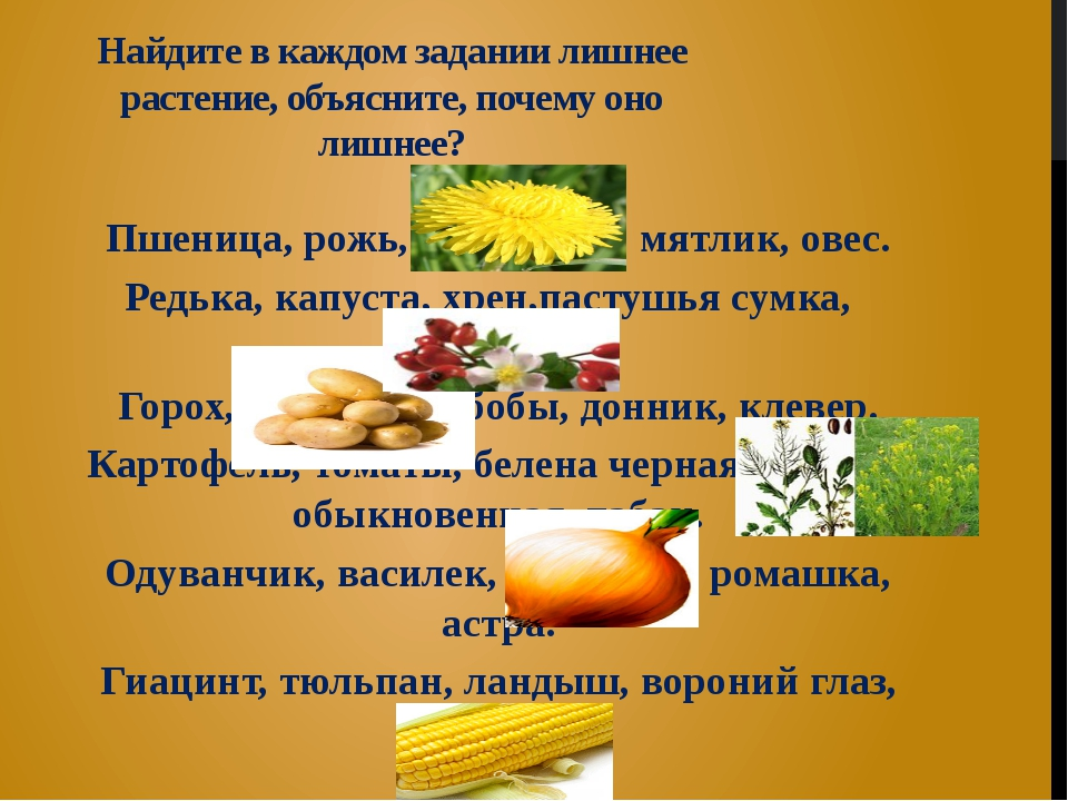 Найдите в каждом задании лишнее растение, объясните, почему оно лишнее? Пшени...