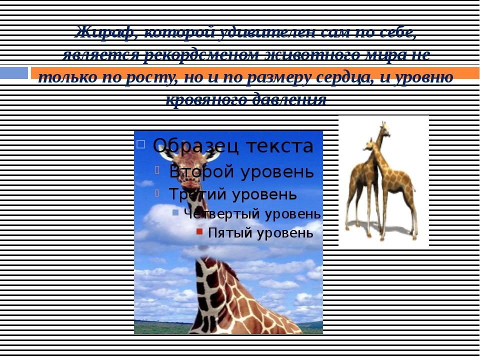 Жираф, которой удивителен сам по себе, является рекордсменом животного мира н...