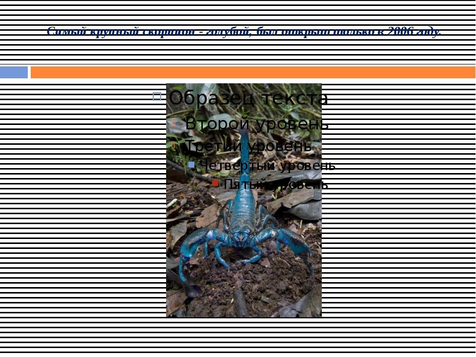 Самый крупный скорпион - голубой, был открыт только в 2006 году.