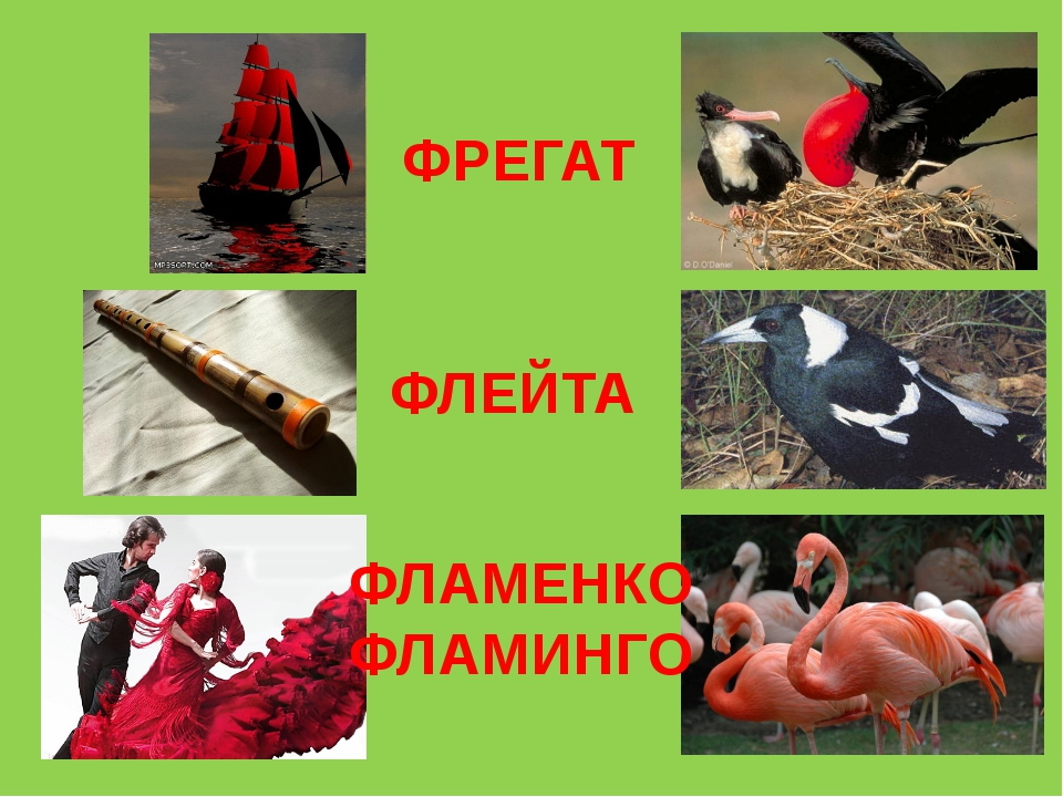ФРЕГАТ ФЛЕЙТА ФЛАМЕНКО ФЛАМИНГО