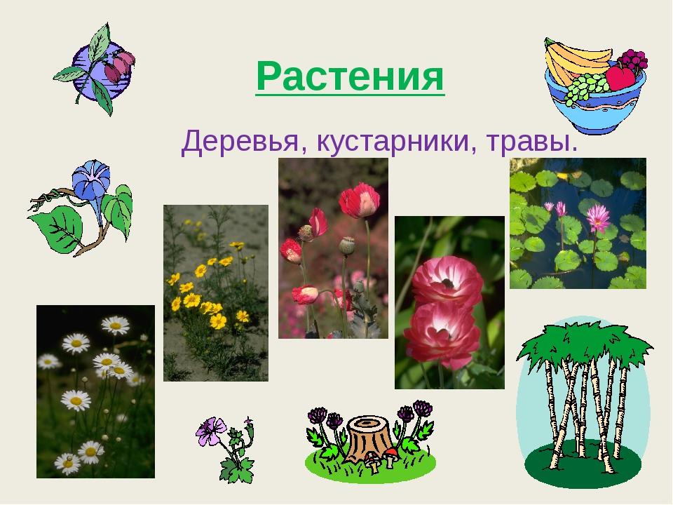 Растения Деревья, кустарники, травы.