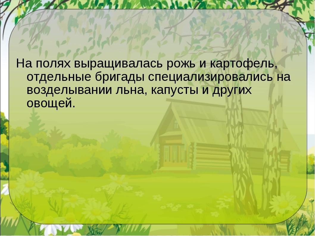 На полях выращивалась рожь и картофель, отдельные бригады специализировались...