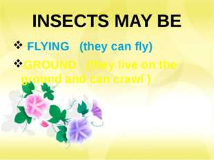 INSECTS MAY BE FLYING (they can fly) GROUND (they live on the ground and can