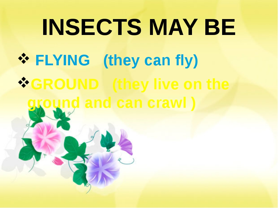 INSECTS MAY BE FLYING (they can fly) GROUND (they live on the ground and can...