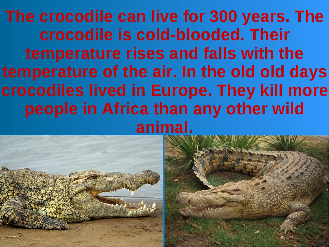 The crocodile can live for 300 years. The crocodile is cold-blooded. Their te...