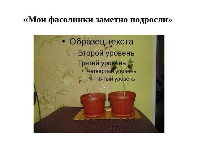 «Мои фасолинки заметно подросли»