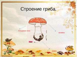 Строение гриба. шляпка пенек Плодовое тело