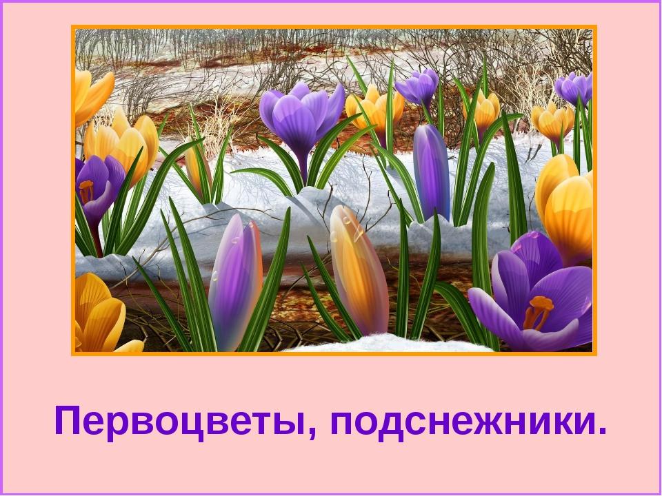 Первоцветы, подснежники.