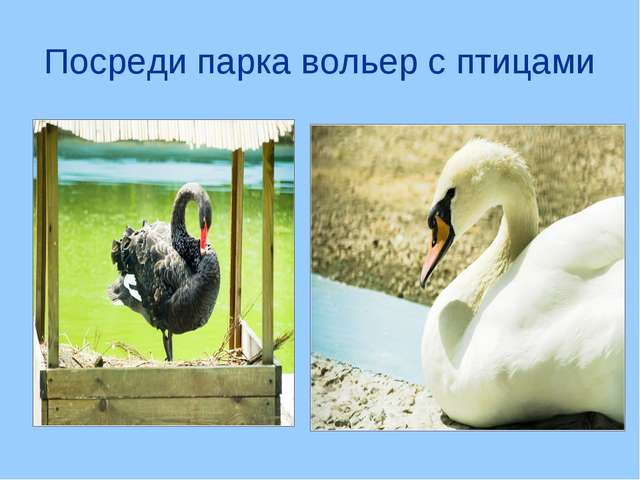 Посреди парка вольер с птицами